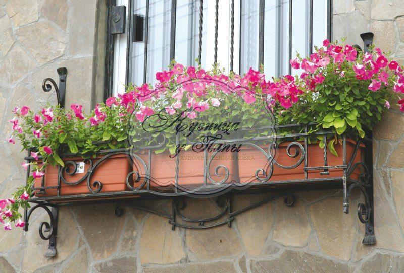 Цветы на окне: комнатные растения для южных, северных и друг.